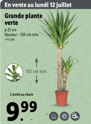 Grande plante verte - Différentes variétés, 130 cm minimum