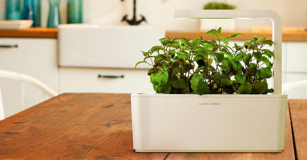 Kit de démarrage Herb Garden - 3 Plantes