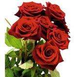 Bouquet de 7 roses qualité Premium - différents coloris