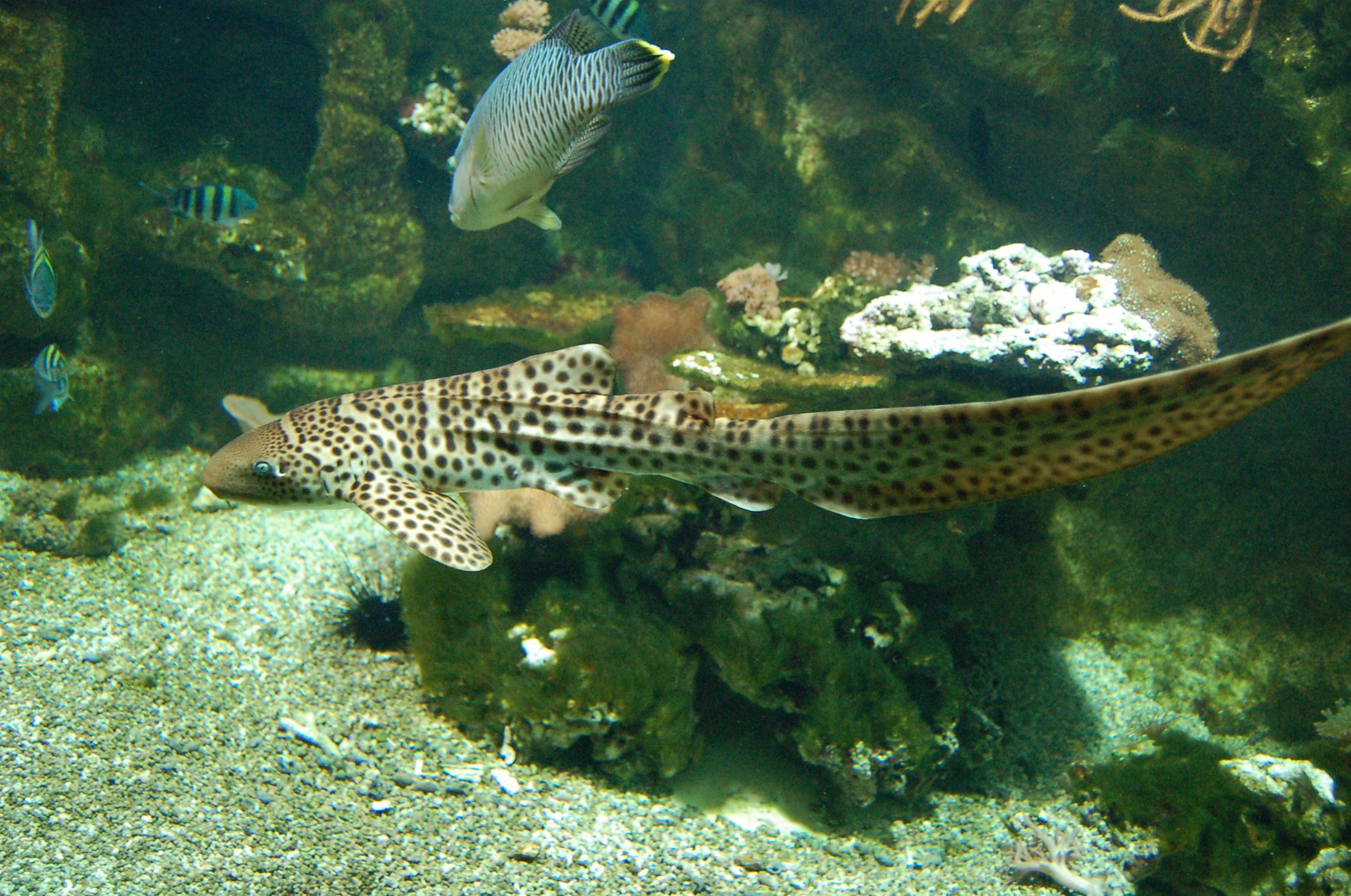 Samedi 8 juin : Entrées gratuites à l'aquarium Tropical de Paris (Porte Dorée)