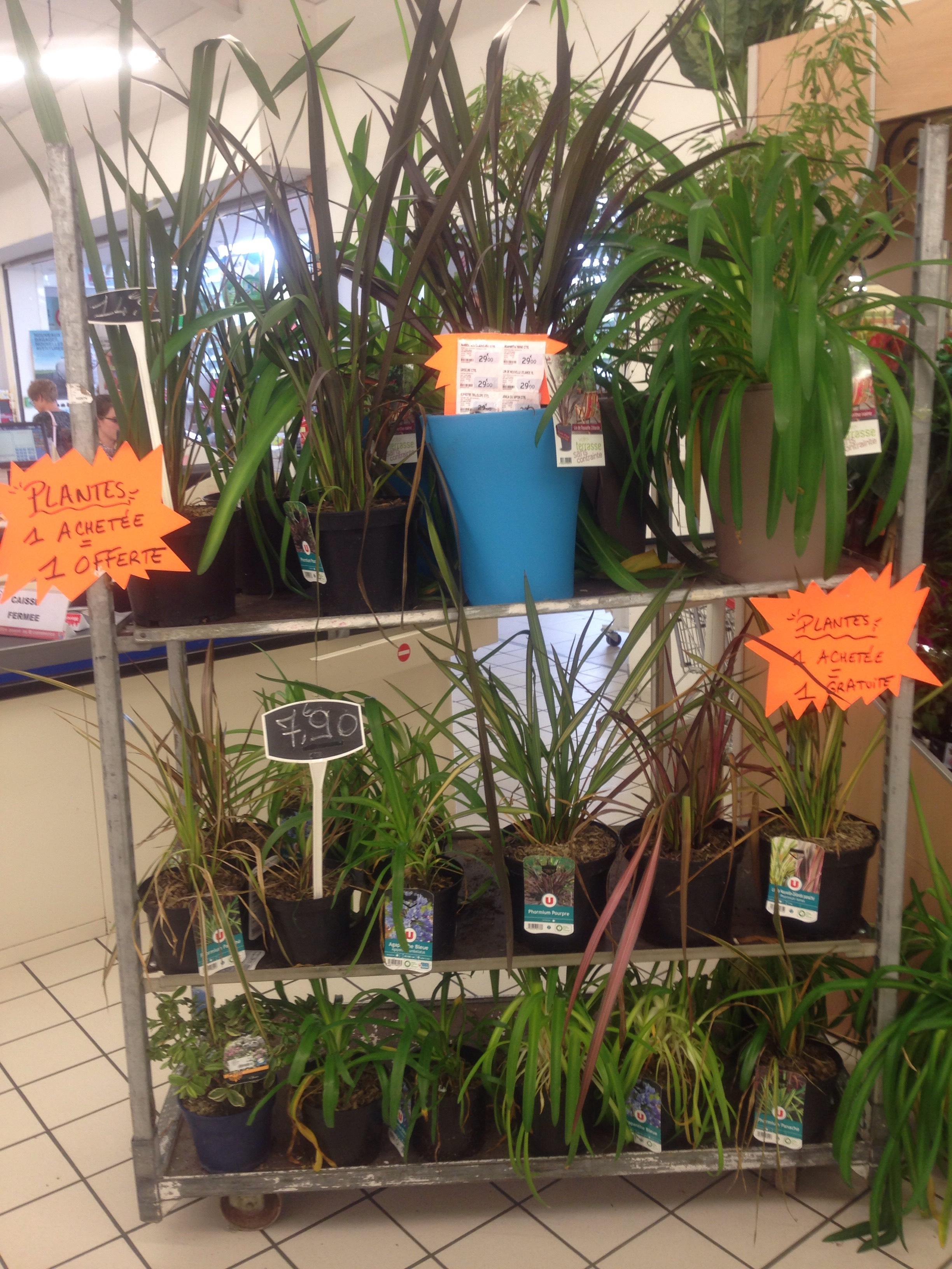1 plante acheté = 1 plante offerte