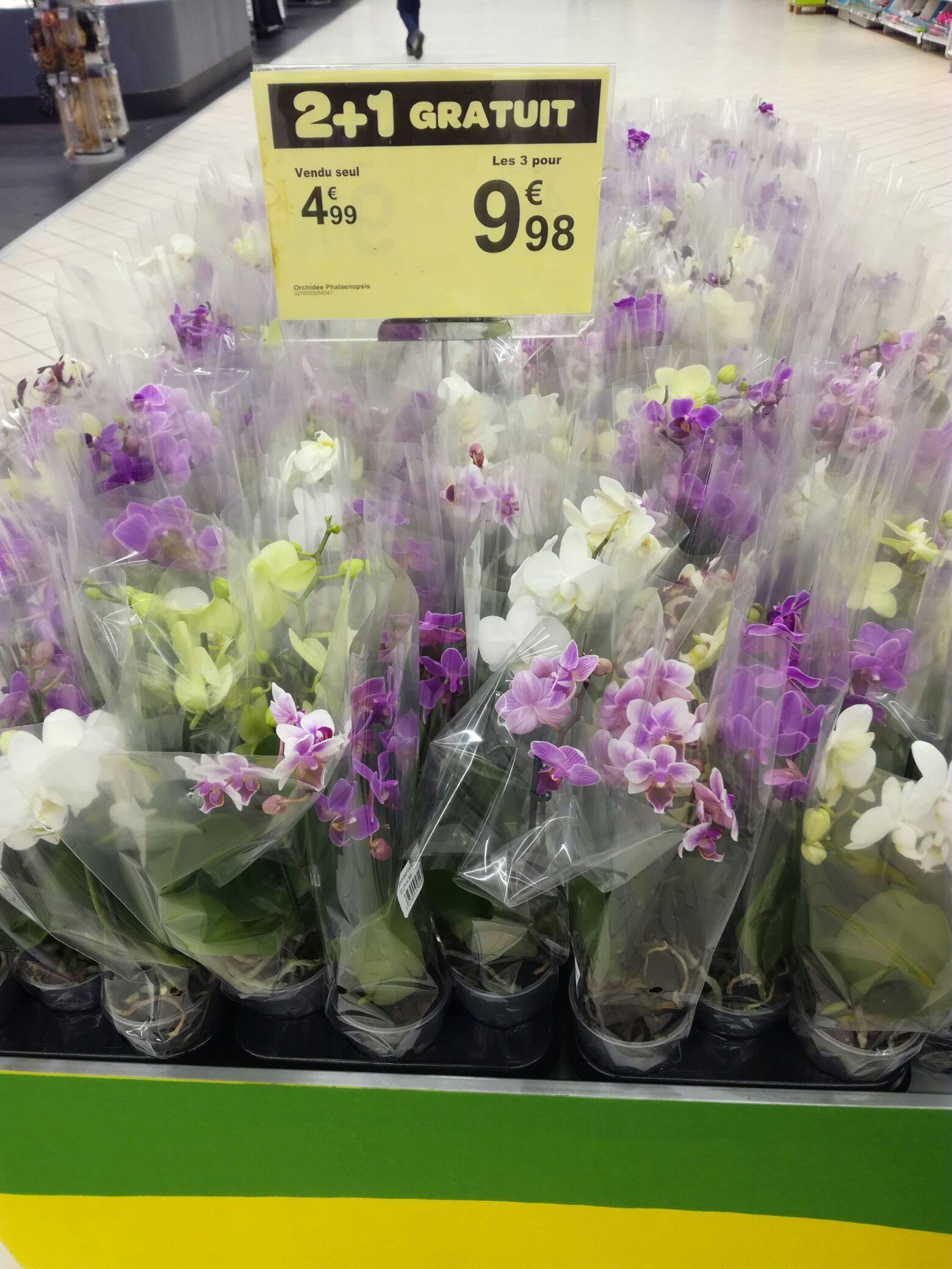 3 pots d'Orchidées Phalaenopsis
