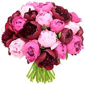 Bouquet de fleurs : 30 Pivoines (10€ de port)