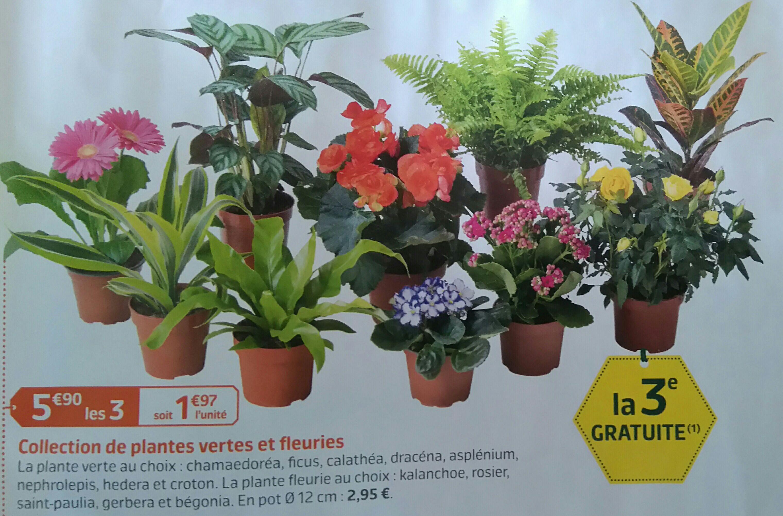 Lot de 3 plantes vertes ou fleuries d'intérieur (pot de 12 cm)