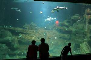 Pass pour 4 personnes pour l'Aquarium de Paris (Cineaqua)