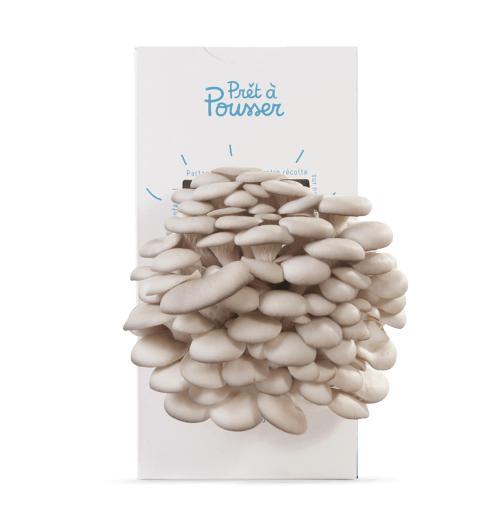 15% de réduction sur les kits à champignons