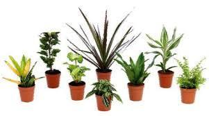 Mini-plantes vertes - plusieurs variétés (Ø 09 cm)