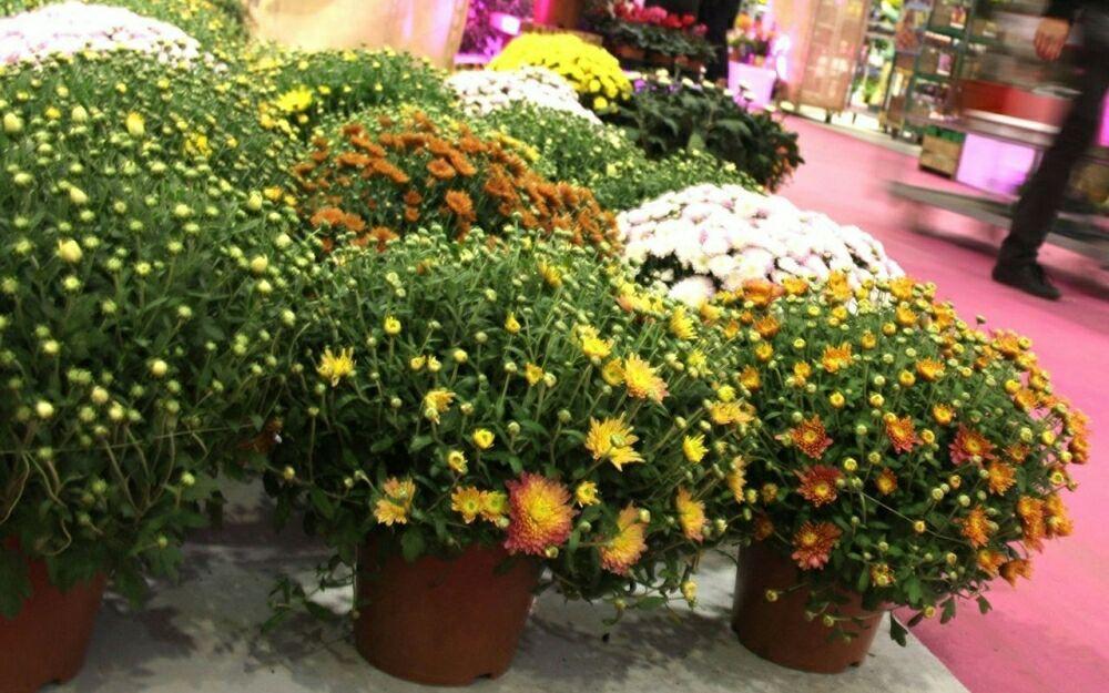 Dès 10h: Distribution gratuite de fleurs et plantes