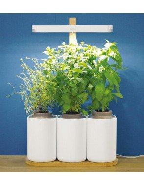 Mini-potager d'intérieur Lilo (trois pots, avec éclairage à LED)