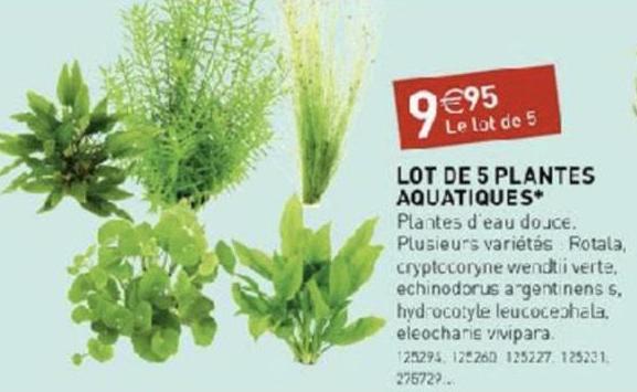 Lot de 5 plantes d'aquarium