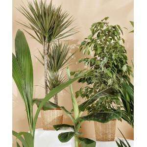Plante verte en pot diam tre 24 cm - Plante verte en bocal ...