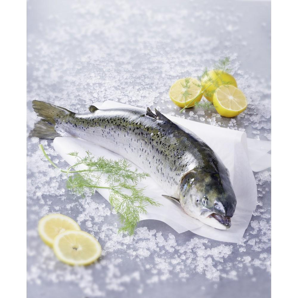 1 kg de saumon entier de Norvège - Sans antibiotiques
