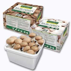 Kit de culture de champignons de Paris ou des bois : Bac + Terreau + Compost