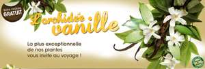 1 Orchidée Vanille + Oeillets d'inde / Port inclus