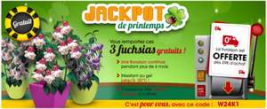 Lot de 3 Fuchsias gratuit (5,99€ de port)