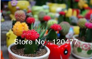 Assortiment de 10 Mini Cactus
