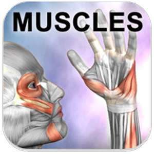 application Learn Muscles: Anatomy gratuite sur Android