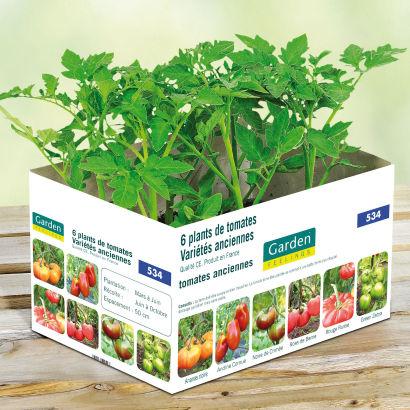 [Le 07/06] 6 Plans de tomates variétés anciennes