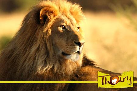 Billet pour le parc zoologique de Thoiry
