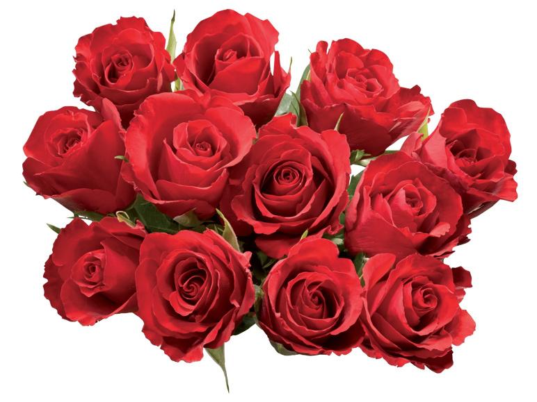 Bouquet de 12 mini roses