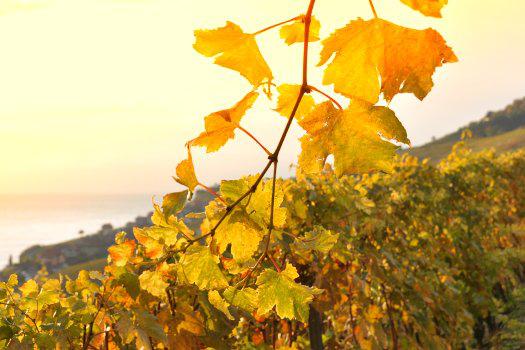 Séjour de 2 nuits en Champagne (Vitry-le-François) pour 2 personnes