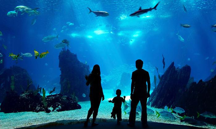 Nausicaa : 1 entrée Enfant de 3 à 12 ans à 8.6€ et Adulte
