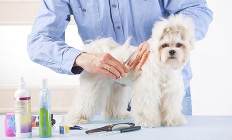1 toilettage canins pour petit et moyen chien à Quesnoy Sur Deûle